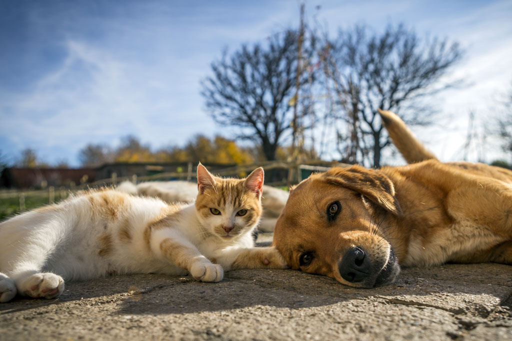 dog and cat play together. cat and dog lying outside in the yard